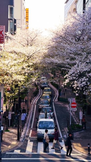 makoto shinkai scenery